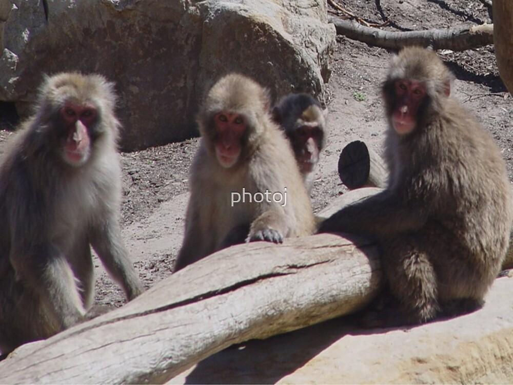 "photoj Animal-Monkey Meeting, ""I Think We Have Been Sprung"" by photoj"
