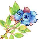 Wild Maine Blueberries by PatriciaSheaArt