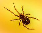 spider 2 by John Velocci