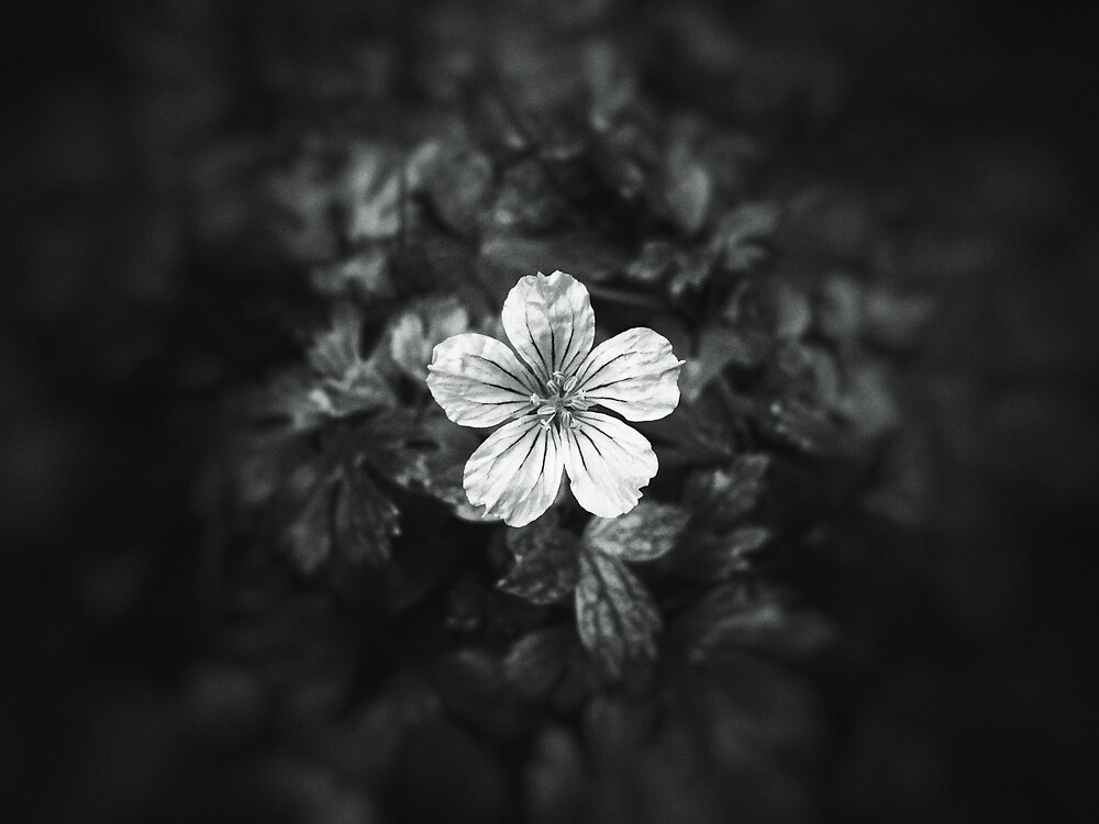 Minimalistic black and white flower petal by PLdesign