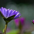 A Lilly with a Visitor by TJ Baccari Photography
