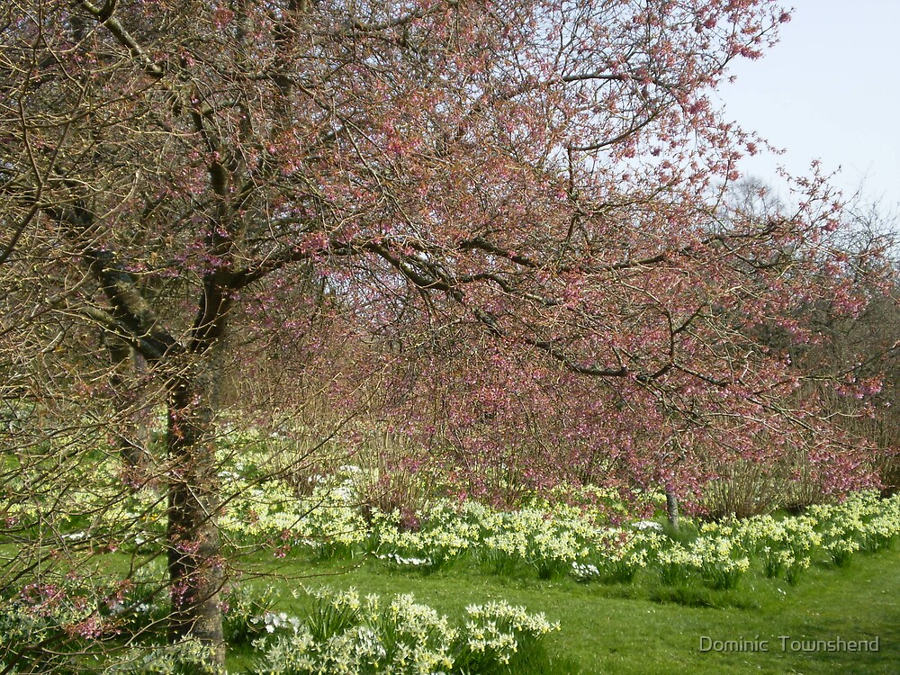 tree and daffs by Dominic  Townshend