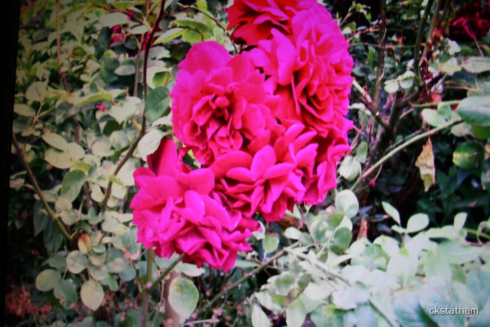 vibrant flowers by ckstatham