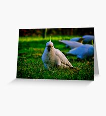 """""""Concentrating on Lunch"""" Greeting Card"""