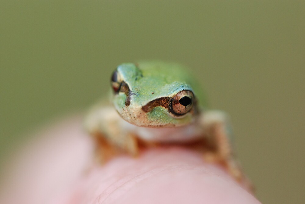 Green Frog by ssphotographics