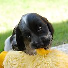 winnie and her duck by ssphotographics
