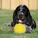 winnie and her ball by ssphotographics