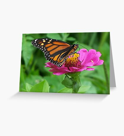 The Monarch Munch Greeting Card