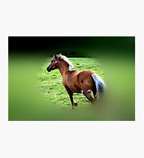 Galloping Gallantly Photographic Print