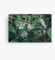 Film Aster Canvas Print