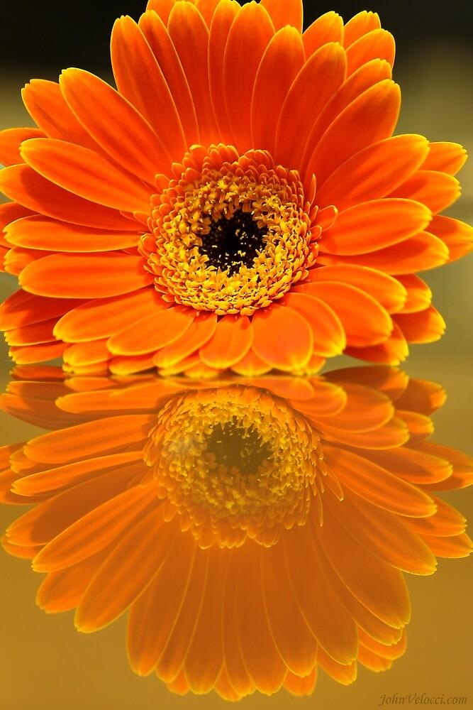 Double Orange by John Velocci