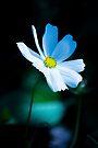 Daisy 3 by John Velocci