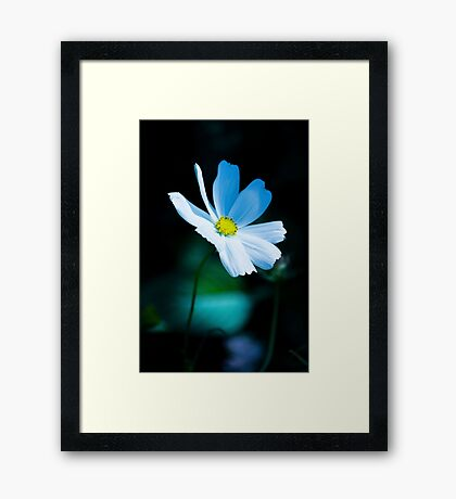 Daisy 3 Framed Print