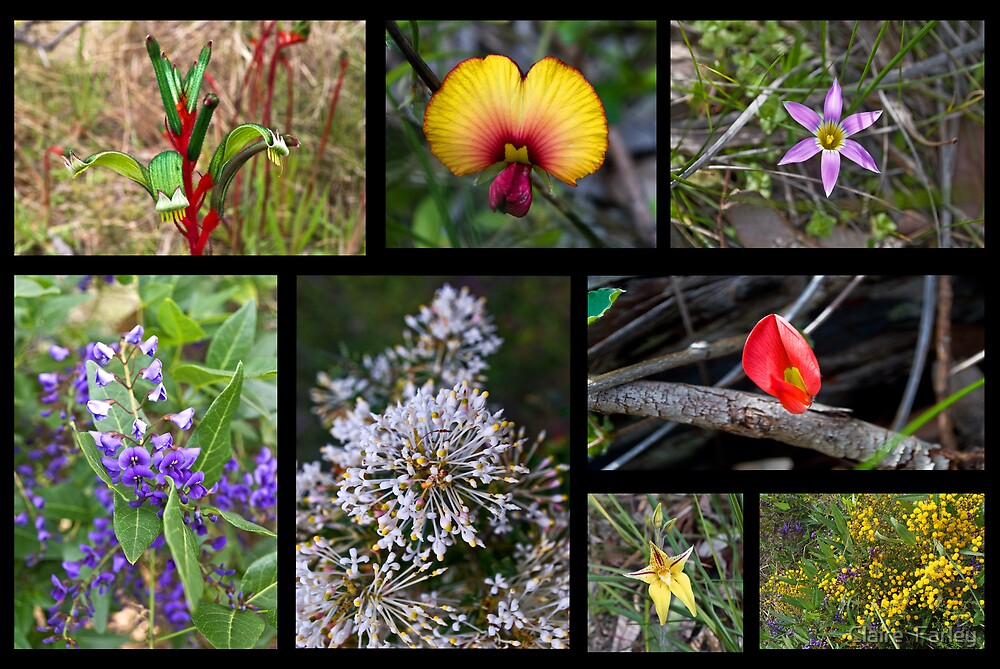 Colours of the Bush by Claire  Farley
