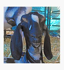 Face-to-goat face 3 Photographic Print