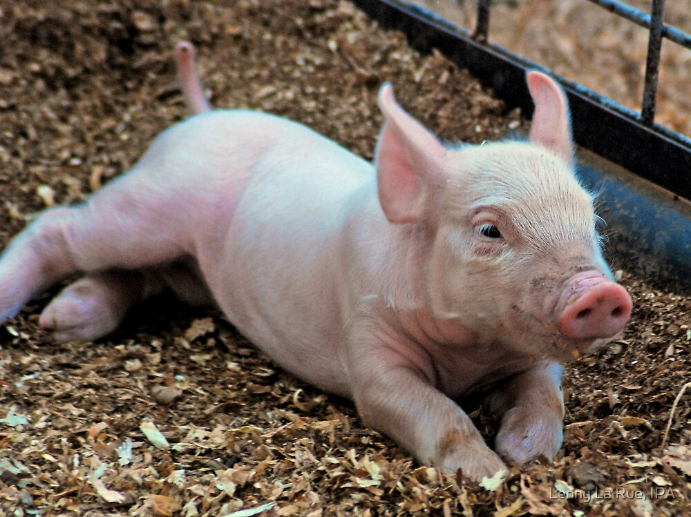 There are Piglet Elves too! by Lenny La Rue, IPA
