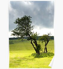 Tree in a field Poster
