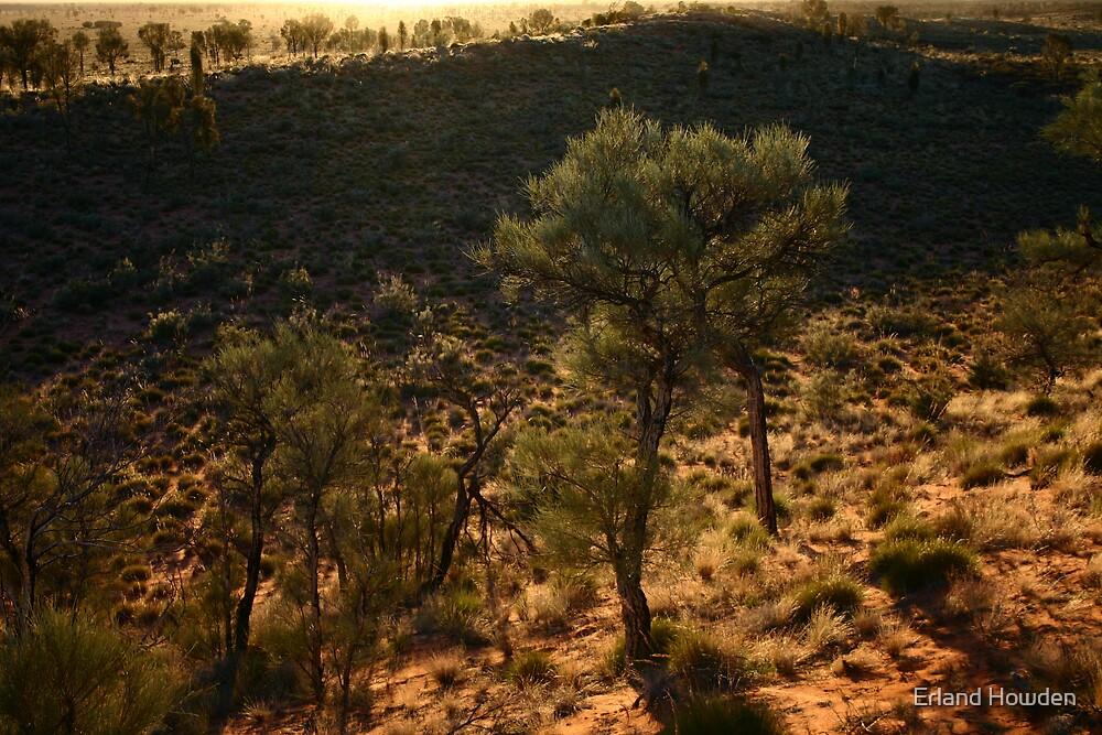 Desert Oaks by Erland Howden