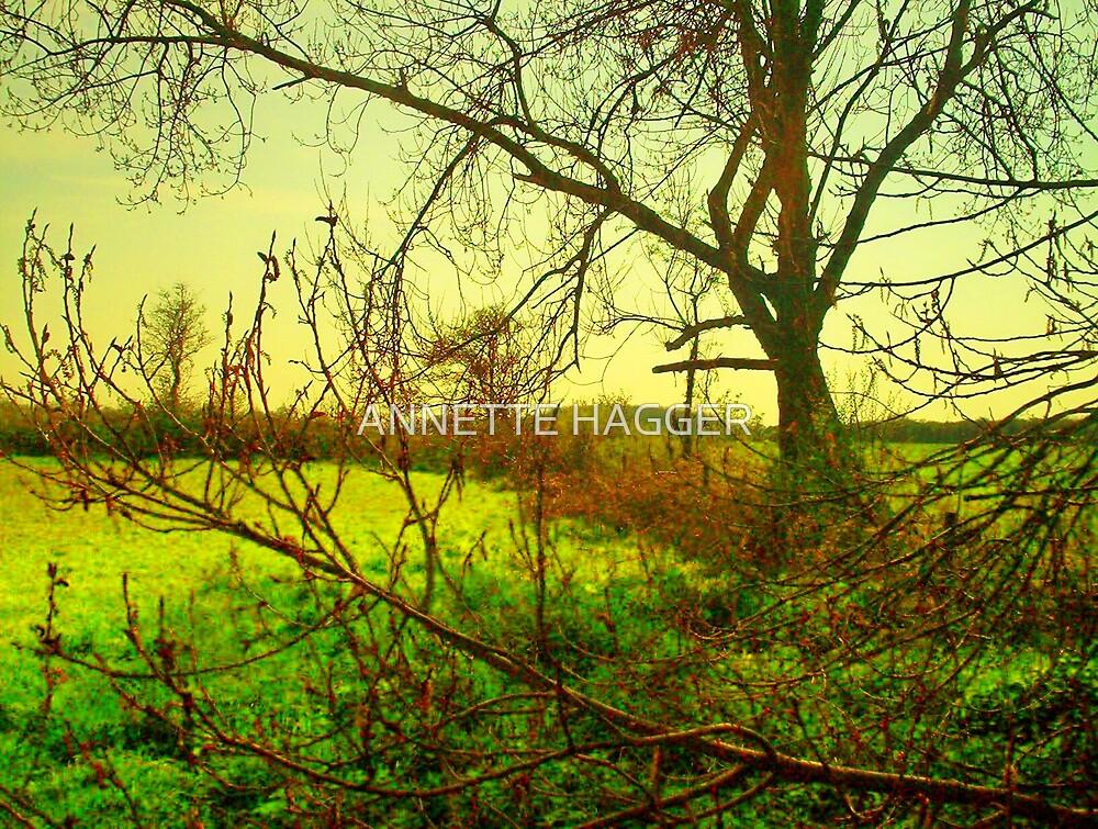 WINKS MEADOW by ANNETTE HAGGER
