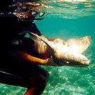 The Shark Tamer by Cathy Jones