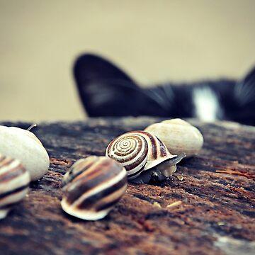 Cat Snails by pmistric