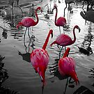 flamingo pink by Bruce  Dickson