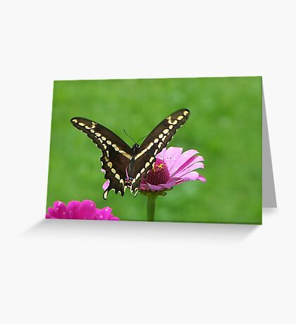 A Monarch`s Travels Greeting Card