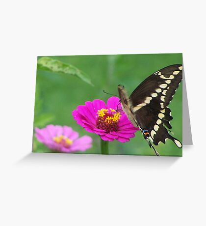 For the Love of  Butterflies Greeting Card