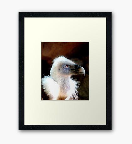 EAGLE 4 Framed Print
