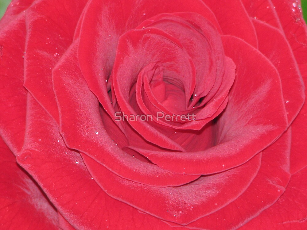 Red Velvet by Sharon Perrett