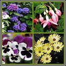 Sommer-Nostalgie - Blumencollage von BlueMoonRose