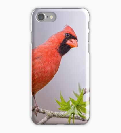 Rumor Mill iPhone Case/Skin