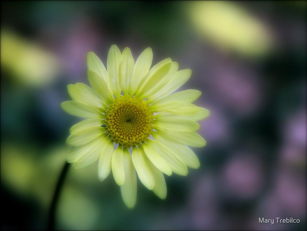 Pastel bokeh... by Mary Trebilco