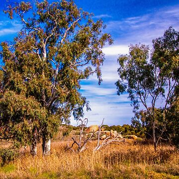 Australian outback by indiafrank