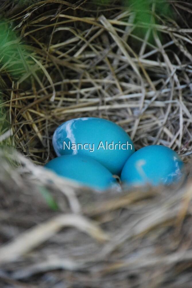 Robin Eggs by Nancy Aldrich