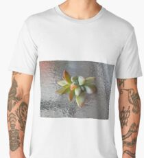 Succulents Aeonium and Sedeveria Men's Premium T-Shirt