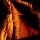 Stallion of amber by Penny Kittel