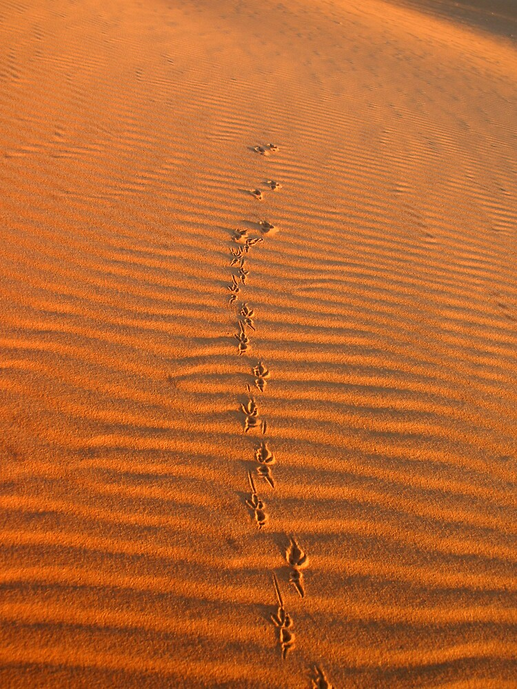 Tracks in the sand by henleyhelen