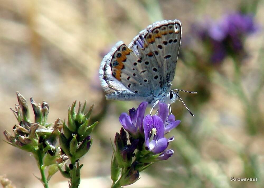 summer fly by tkrosevear