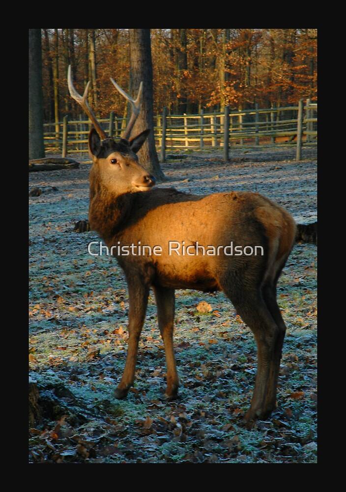 Sunset Deer by Christine Richardson