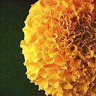 www.lizgarnett.com - Yellow Flower by Liz Garnett