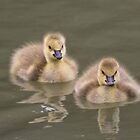 Fluffy twosome by Sue Purveur
