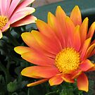 Bright and Beautiful - Bella Cape Daisies von BlueMoonRose