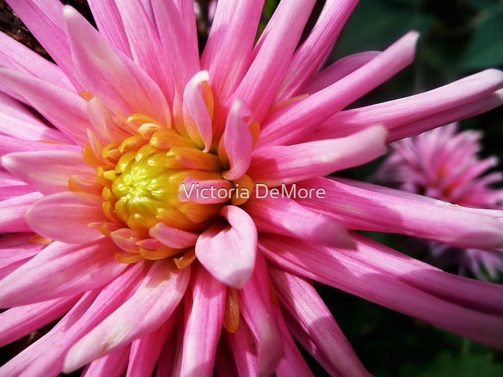 Pink Petals by Victoria DeMore