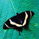 Butterfly Photography 003 by makeitsoph