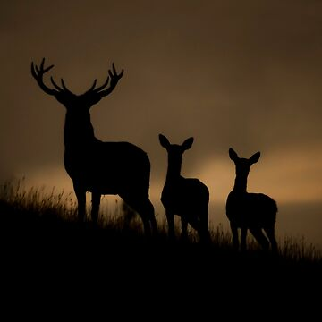 Red Deer at dawn by AndyBeattie