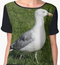 Seagull is standing on the lawn of green grass, side view Women's Chiffon Top