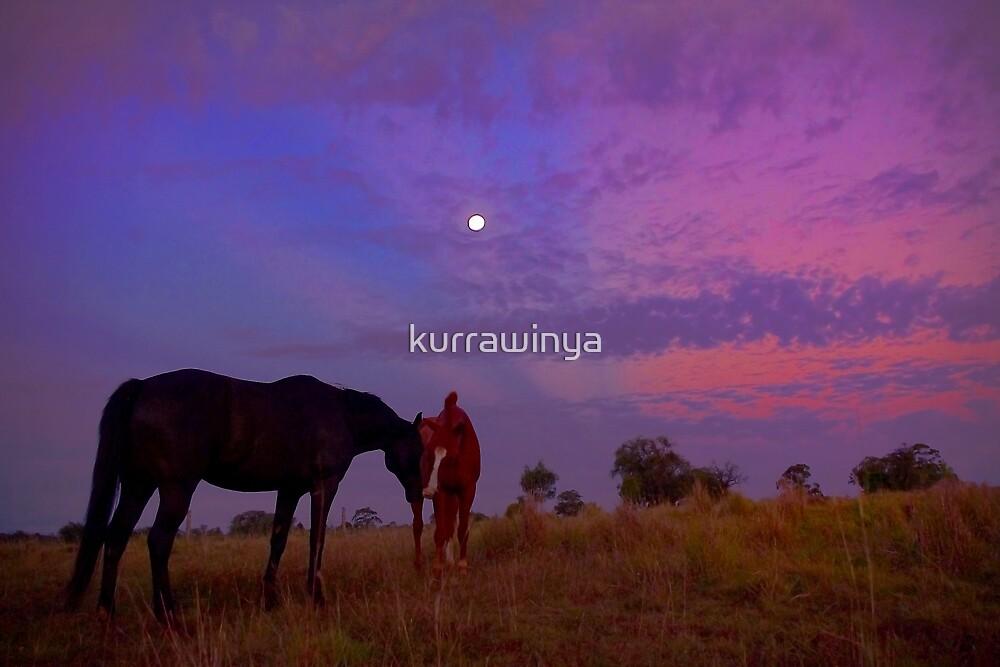 Moonlit Friends by Penny Kittel