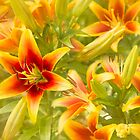 Lilies Galore by Marilyn Cornwell