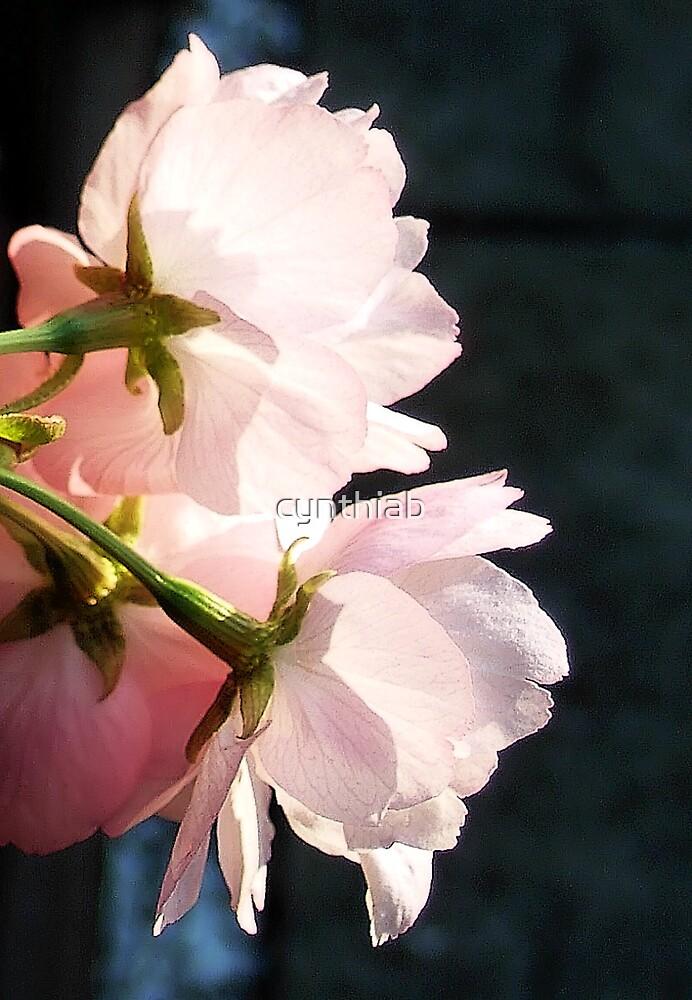 blossom by cynthiab